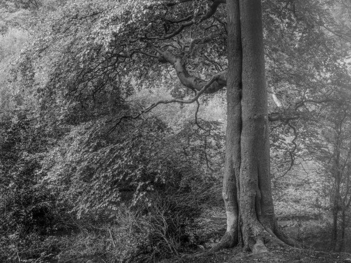 Black and white tree tick walk